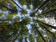 Stockwerke des Waldes