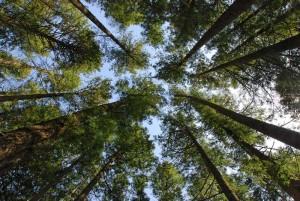 Bäume im Wald / Die oberen Stockwerke