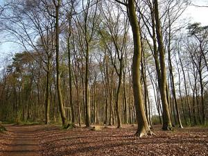 Bäume entwickeln Überlebensstrategien